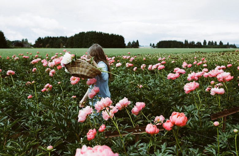 Tips for growing peonies by kinfolk made from scratch - Growing peonies in the garden ...